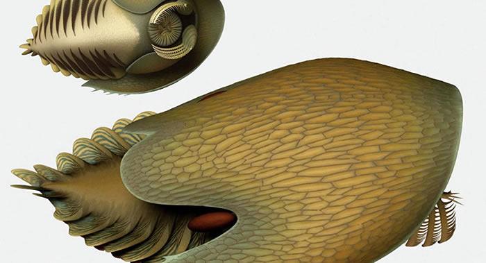 """加拿大发现寒武纪奇怪海洋生物""""克苏鲁""""遗骸"""