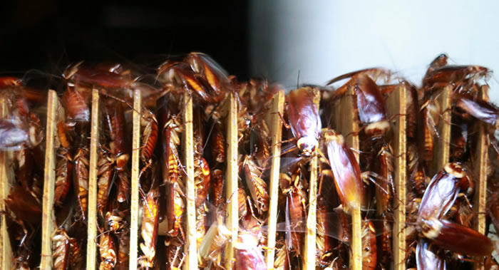 为什么人类无法摆脱蟑螂?这些昆虫的DNA包含祖先族群在进化史上的大量毒素信息