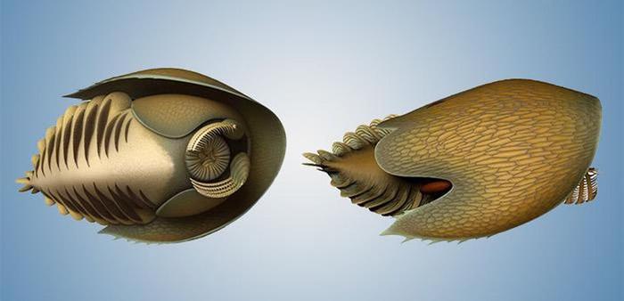 加拿大落基山脉新物种化石以《星球大战》千年隼名字命名:Cambroraster falcatus