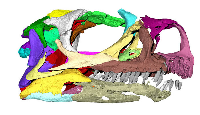 """南非博物馆化石被误认为大椎龙30年 重新研究确认为新品种恐龙""""Ngwevu intloko"""""""