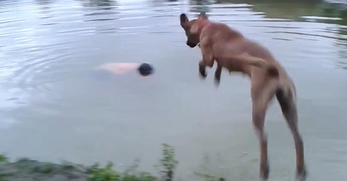 主人跳湖假装溺水 巴西小狗Princesa毅然跳进水里救援