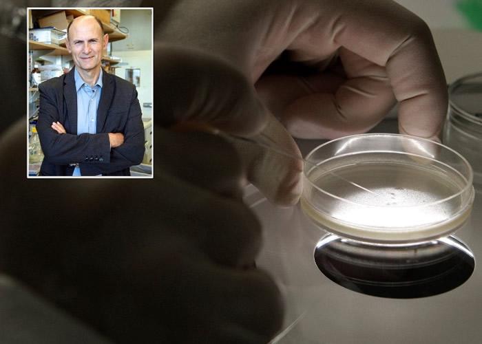 人猴胚胎实验由贝尔蒙特(小图)主持。