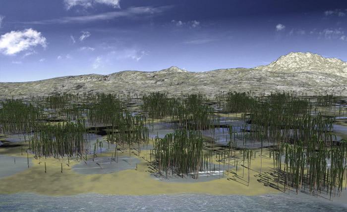 安徽省新杭镇附近发现亚洲最大泥盆纪森林