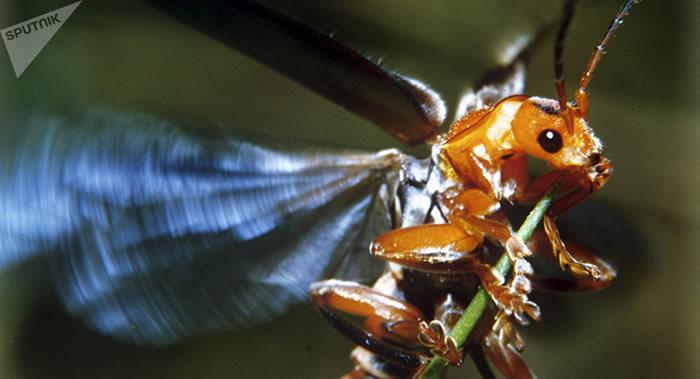 """科学家正在为军事用途导弹制造新一代电子昆虫""""大脑"""""""