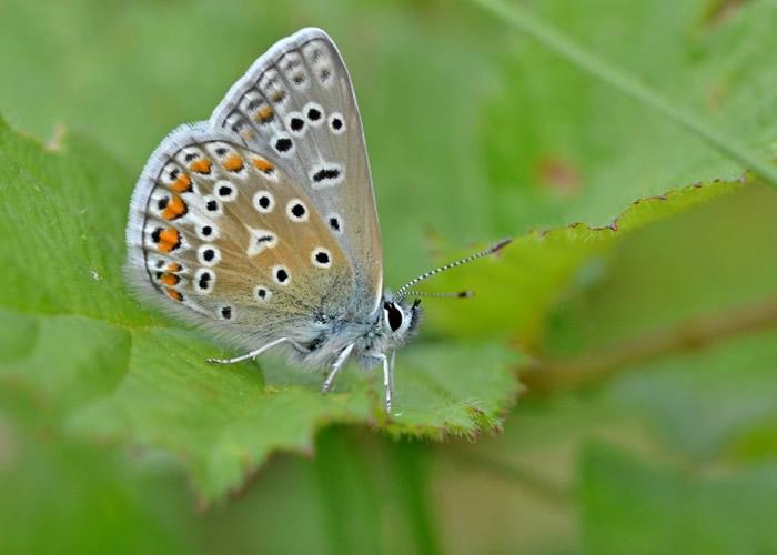 蝴蝶夫人身披羽衣闲聊,仪态万千。