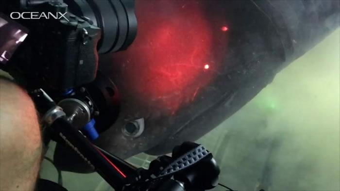 美国小型潜艇在巴哈马海域深海巧遇1.8亿年前史前巨鲨——钝鼻六鳃鲨