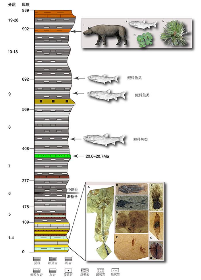 藏北伦坡拉盆地古近纪-新近纪丁青组岩性序列和化石层及其所含化石类型