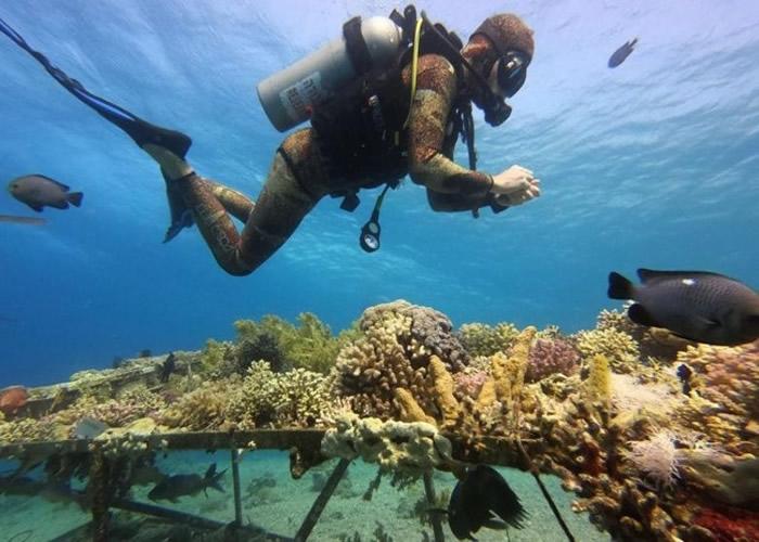 珊瑚死亡速度可能预计更快。