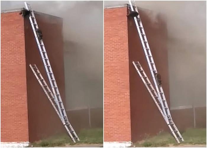 """""""生命安全是首要任务"""" 美国印第安纳州消防搭云梯救浣熊获赞"""
