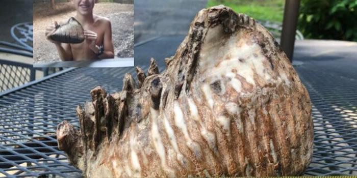 美国小男孩在俄亥俄州度假时意外发现猛犸象牙齿化石