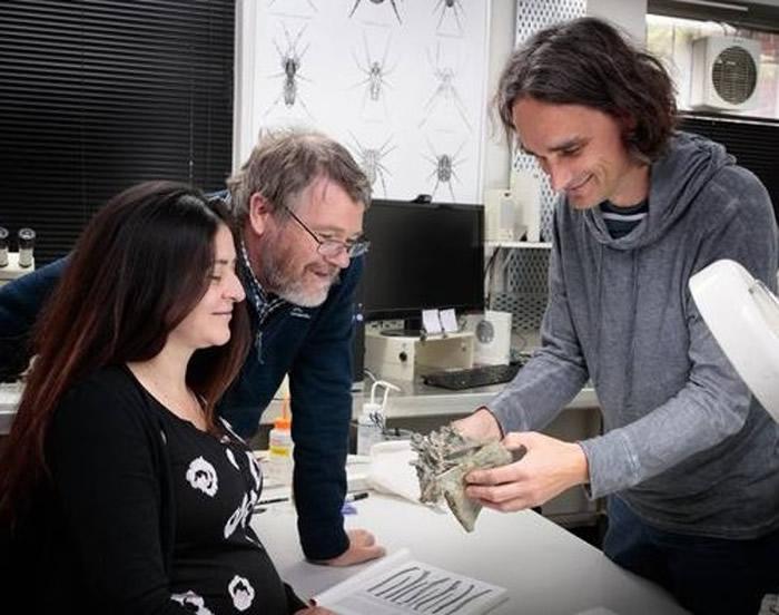 研究人员分析古代企鹅腿骨。