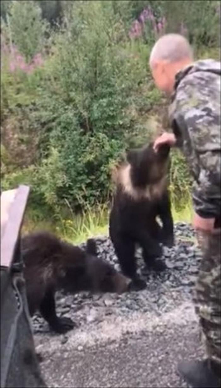 俄罗斯男子喝醉后伸手想逗野生小熊 手被咬住差点被拖走