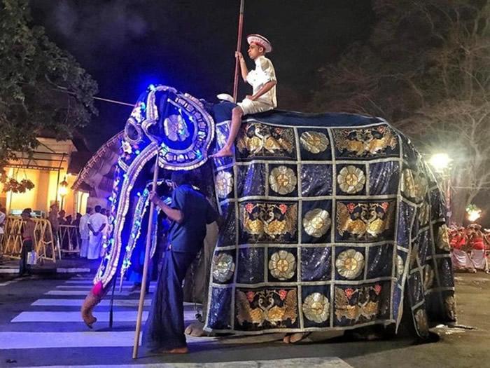 斯里兰卡70岁老象受虐倒下 当局下令调查象牙节