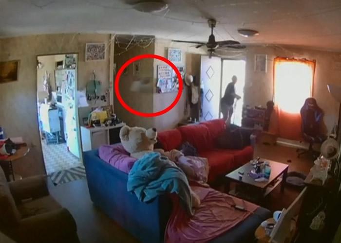 喜鹊(红圈)在屋内飞掠。