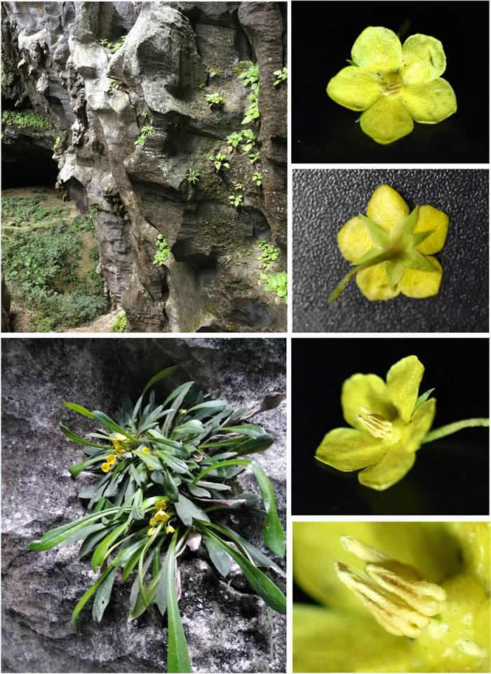 国际植物分类学期刊《PhytoKeys》:对生物多样性热点地区的研究彰显中国植物的多样性和特有性