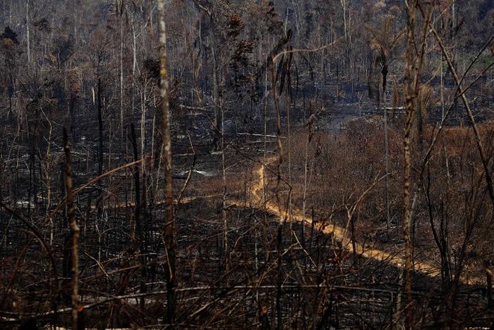 民众担忧非洲雨林同样面临野火肆虐的危机