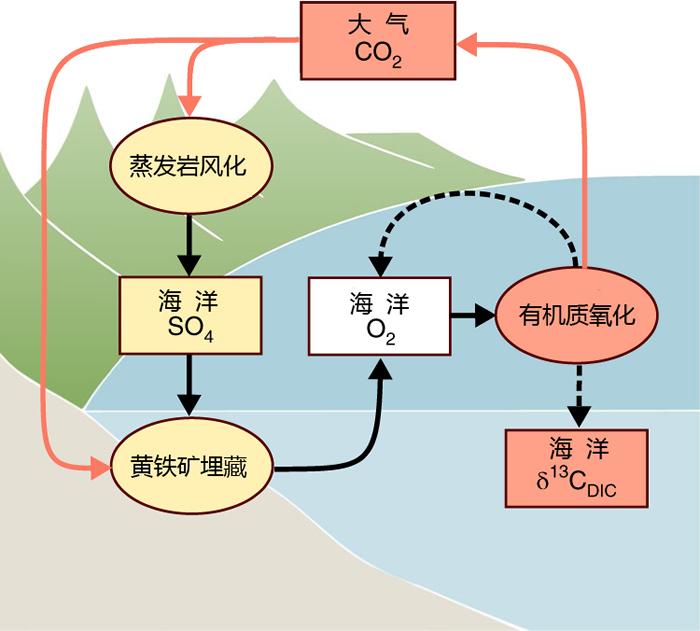 蒸发岩风化与海洋有机碳库氧化的正反馈模型图