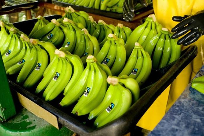 全球暖化加黄叶病影响 香蕉或在2050年时完全消失