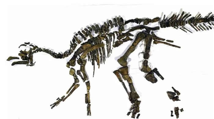 """日本最大恐龙化石被正式认定为新种 命名为""""日本神龙""""Kamuysaurus japonicus"""