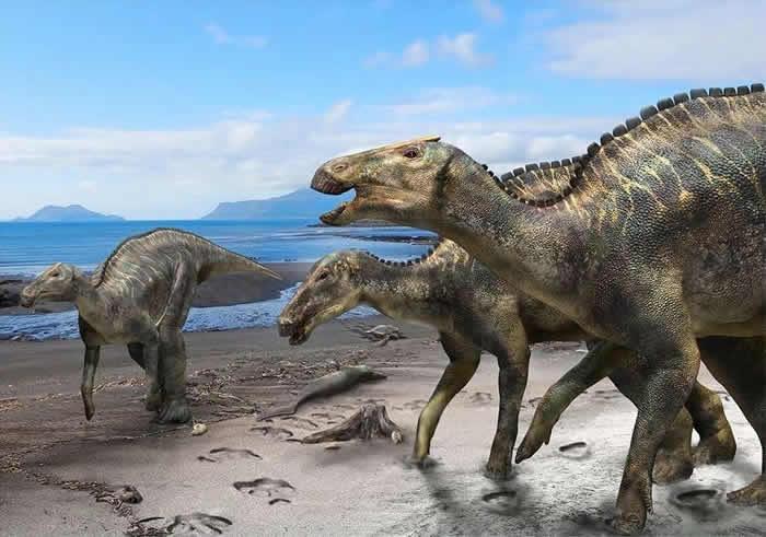 日本北海道Hakobuchi地层海相沉积中发现晚白垩世鸭嘴龙新属种Kamuysaurus japonicus
