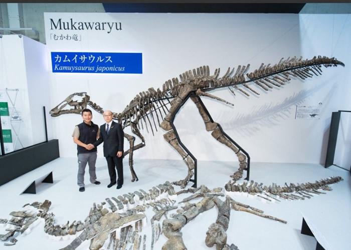 """日本北海道出土的恐龙化石属新品种 以日本龙神命名为""""神威龙Kamuysaurus japonicus"""