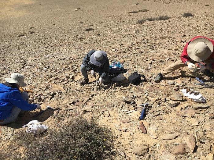 科考队员在西藏仲巴县采集二叠纪化石