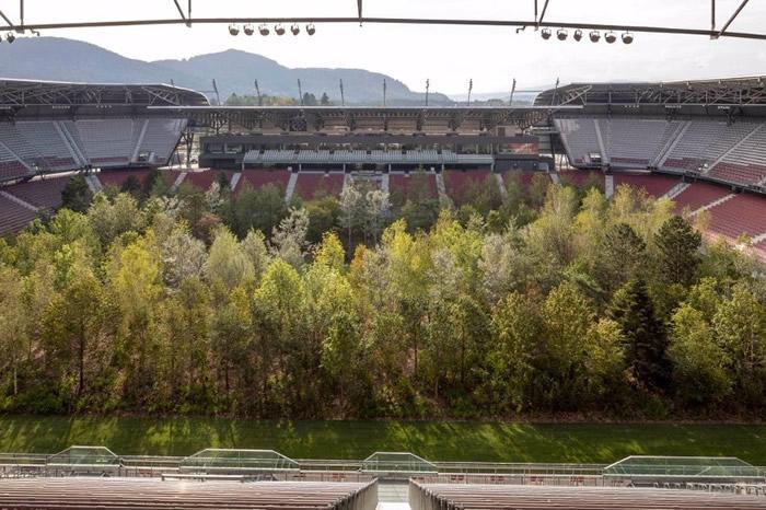 壮观树林与观众席形成巨大对比。