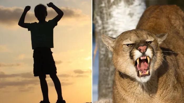 美国科罗拉多州8岁男童被美洲狮咬头拖走 捡树枝戳大猫眼睛逃过一劫