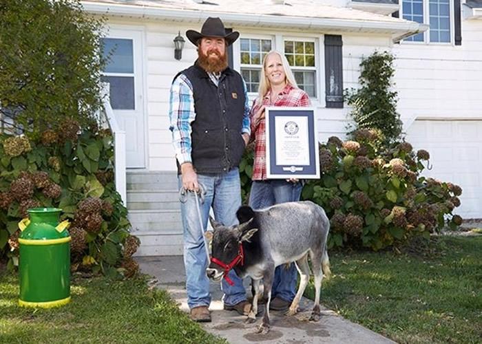 汉弗莱是最矮的公牛纪录保持者。