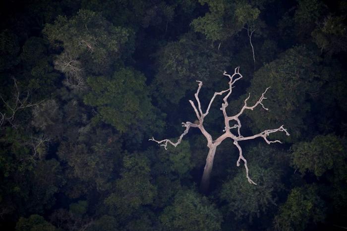 亚马逊雨林制造全世界20%的氧气?科学家指太过高估了 可能只在零附近徘徊