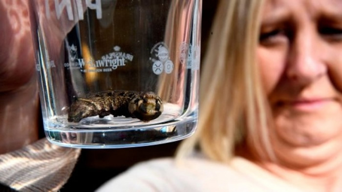 栎列队蛾或红天蛾?英国东约克郡居民院子里发现一个从天而降的神秘生物