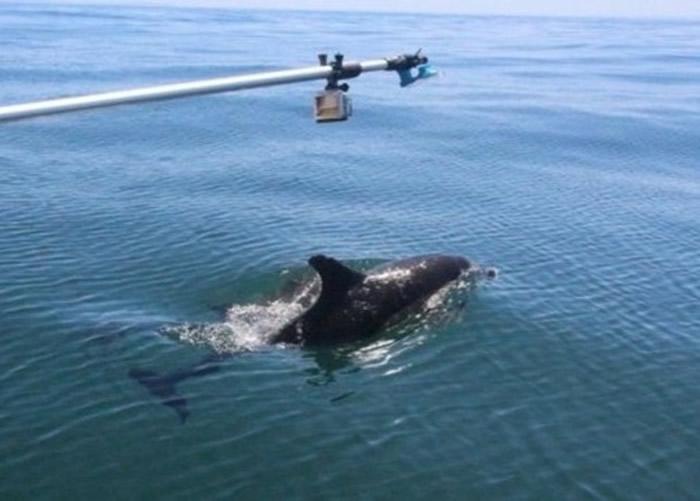 科学家以杆子和小吸盘收集海豚的喷气。
