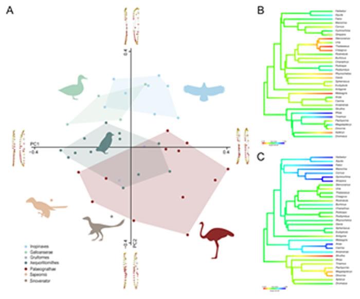 犁骨三维形态的主成分分析结果图(胡晗供图)