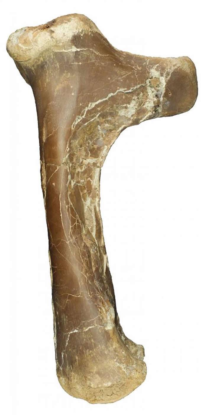 加拿大艾伯塔省30多年前出土的化石终证属新品种翼龙Cryodrakan boreas