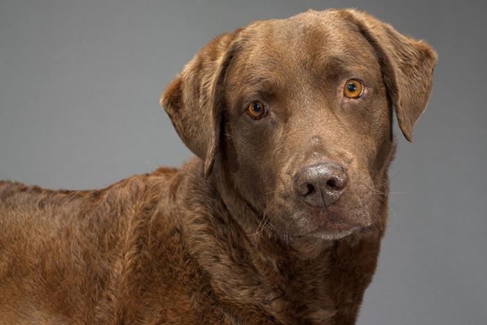 人类在许多方面影响了狗狗的演化,包括牠们的脑袋是如何建构的。 PHOTOGRAPH BY ROBERT CLARK, NAT GEO IMAGE COLLECT