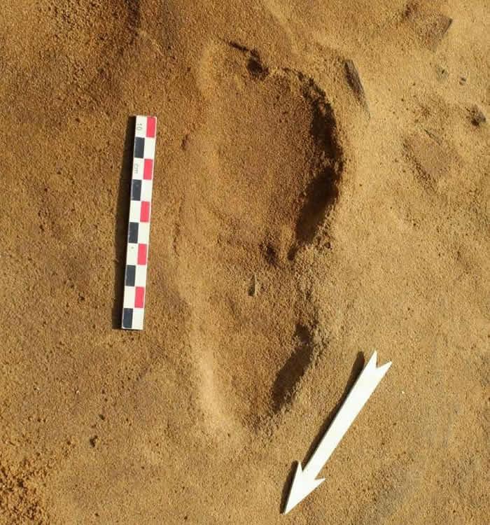 法国勒罗泽市的英吉利海峡岸边发掘出257个约8万年前尼安德特人的脚印化石