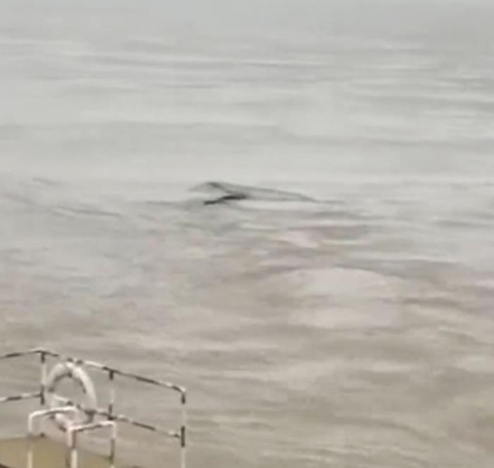 中国版尼斯湖水怪?湖北省宜昌市三峡大坝坝区拍摄到神秘生物
