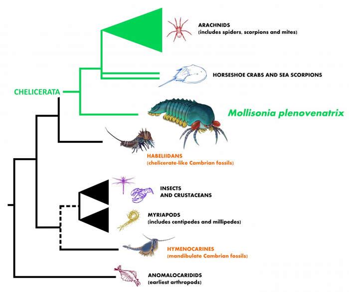 寒武纪布尔吉斯页岩动物群中发现5亿年前莫里森虫(Mollisonia plenovenatrix)新物种