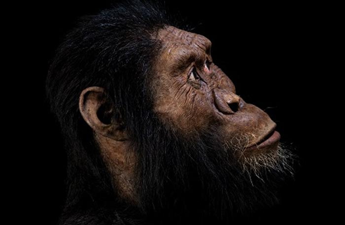 人类祖先换人了?埃塞俄比亚挖出380万年前南方古猿湖畔种头骨化石