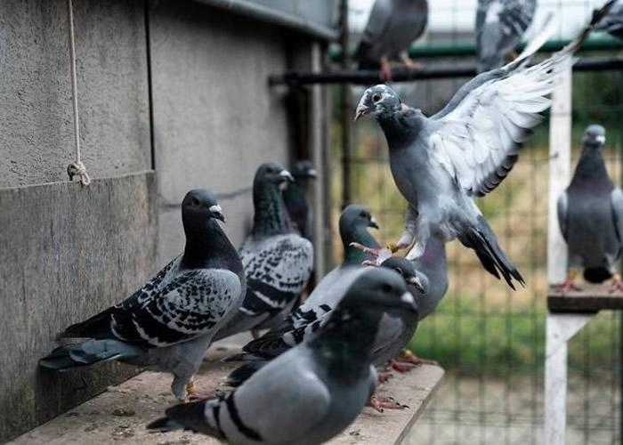 鸟类在CIA的动物间谍计划扮演核心角色。