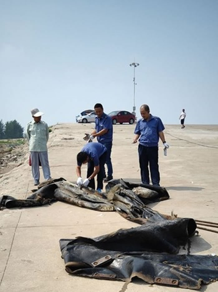 """20米长""""三峡水怪""""在安徽省池州市渡轮码头被捕上岸真面目曝光:造船厂废弃气囊"""