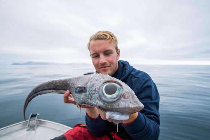 挪威男子钓起深海诡异怪鱼 他爽吃下肚:比鳕鱼还美味