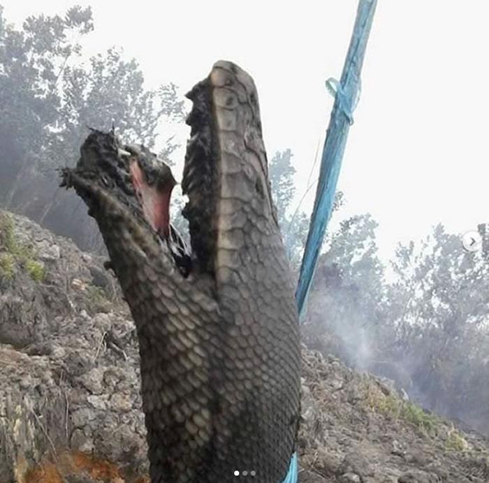 印尼婆罗洲岛加里曼丹森林大火不断 巨蟒被烧成恐怖焦尸