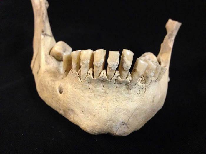 新石器时代动物奶已经是那时的英国人的食物