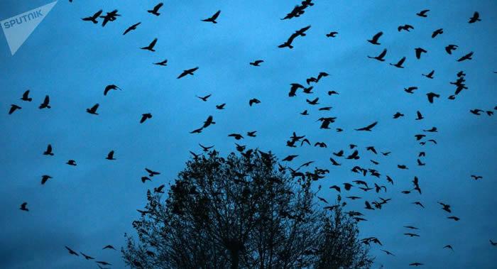 1970年以来北美鸟类数量减少30亿只