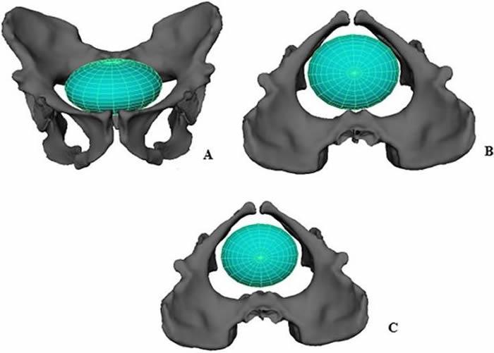 """新研究称200万年前古人类生孩子""""相当容易"""""""