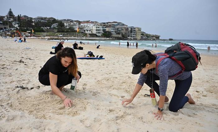 澳洲悉尼民众在邦迪海滩清理埋在沙下的烟头和胶袋。