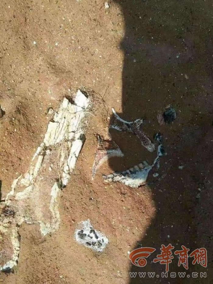 陕西蓝田发现犀牛下颌骨等古生物化石