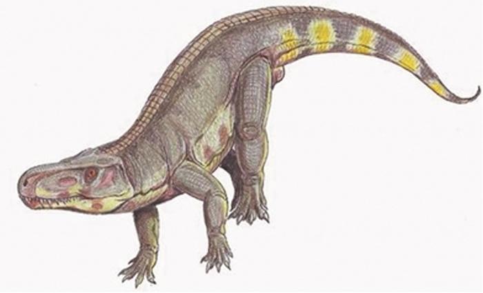 2.1亿年前让食草动物陷入恐慌的并非大型食肉恐龙 而是劳氏鳄?