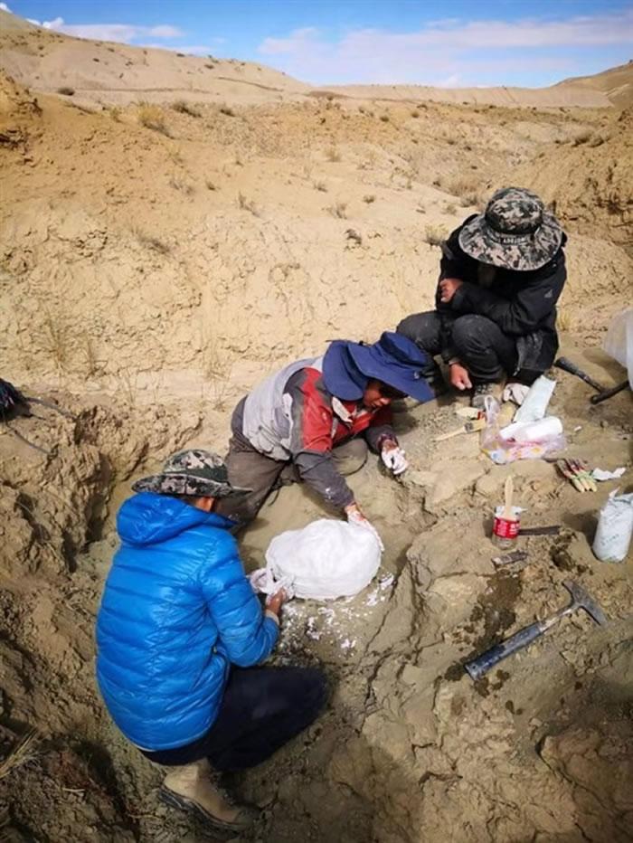 青藏高原古生物科考队在阿里地区札达盆地发现新的三趾马化石